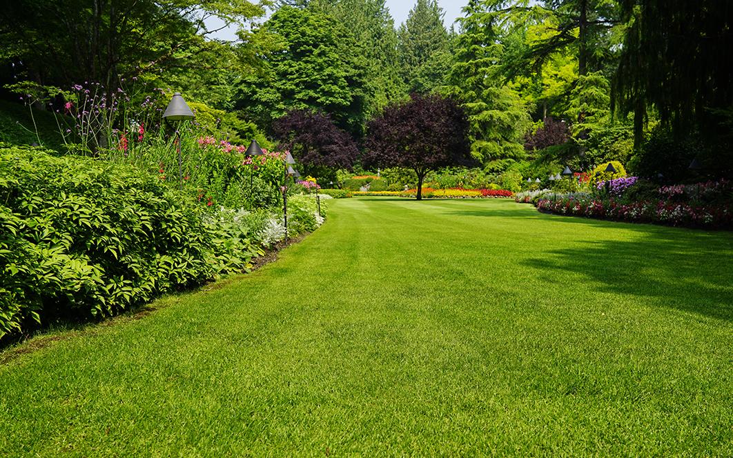 Consejos-cuidar-jardin-verano