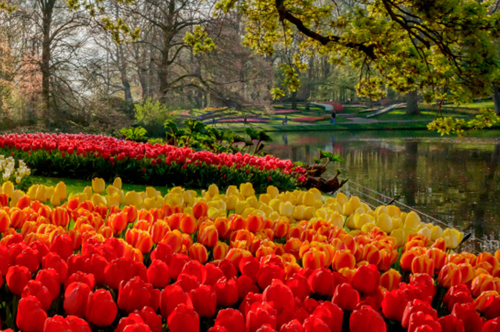 Parque Keukenhof. Holanda