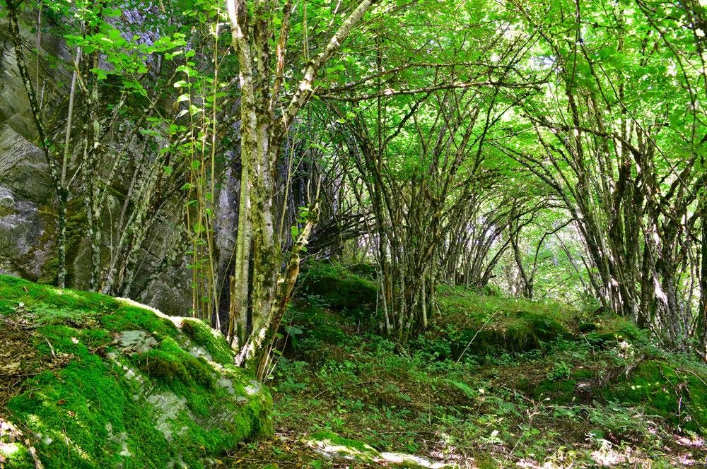 Bosque singular, el Hayedo de Busmayor
