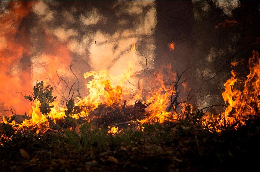 Evitar Incendios forestales