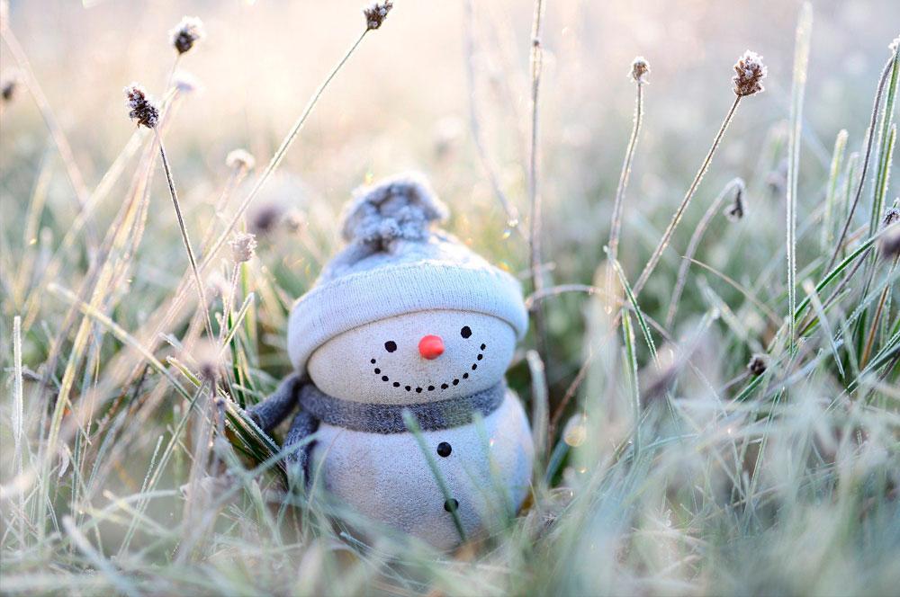 Jardines navideños consejos