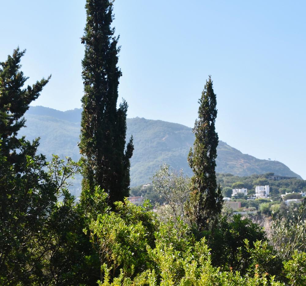 Tipos de jardines, jardín mediterráneo